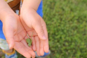 クローバーを乗せた子供の手