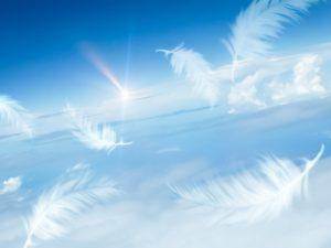 青空に舞う天使の羽